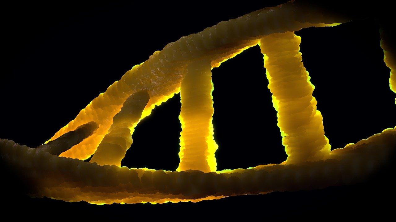 BRCA2, dna
