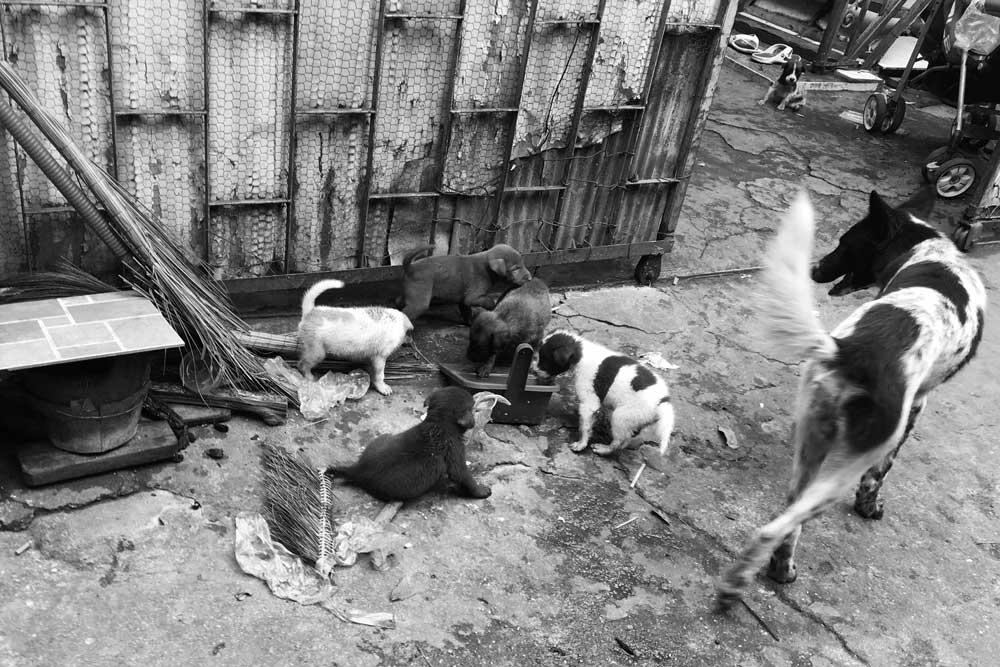 hondenvlees