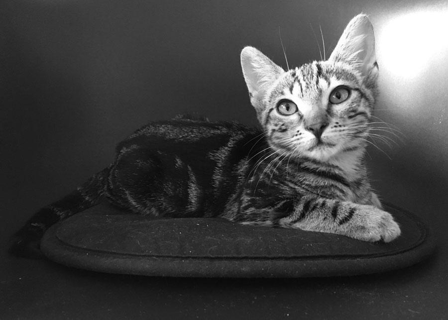 Lola cat kat poes