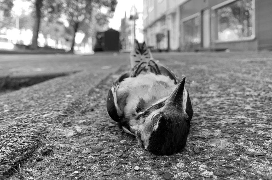 Dode vogel