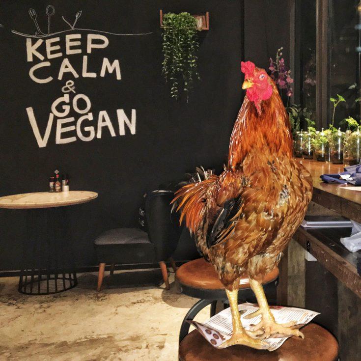 vegetarische kip