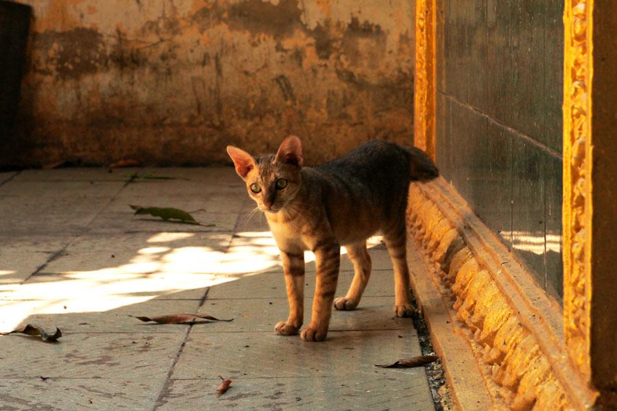 Cambodja - poes - Phnom Penh